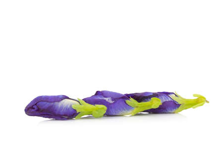 blue pea butterfly pea isolated on white background.