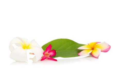 subtropical plants: flower frangipani. plumeria. isolated on white background.