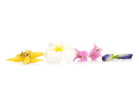 flower color yellow, white, pink, blue isolated on white background (plumeria, climbing ylang-ylang, pea butterfly, Bougainvillea). Stock Photo
