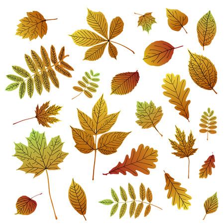 白い背景の上の秋のカラフルなリーフ シルエットのコレクションです。あなたの設計のために設定されたベクトル  イラスト・ベクター素材