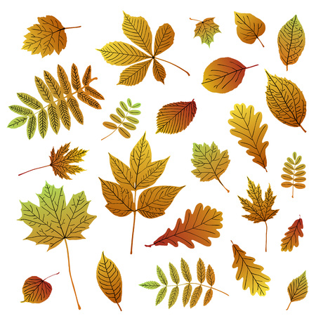 Collection of autumn colorful leaf silhouettes on white background. Vector set for your design