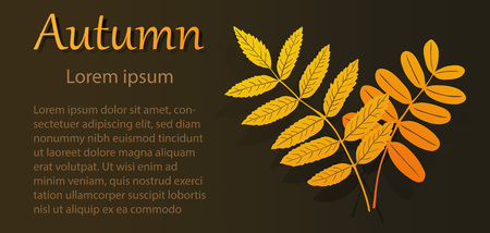 broadsheet: Advertising autumn flyer with rowan and acacia leaves. Brochure on gradient background with text.