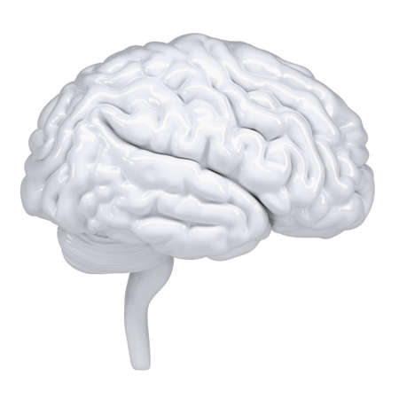 3d white human brain. A side view. Isolated render on a white background photo