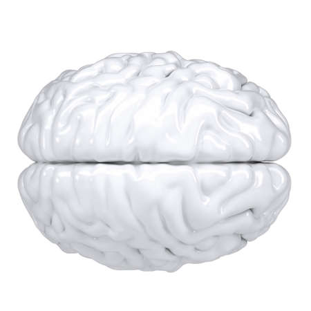 3d white human brain. View from above. Isolated render on a white background photo