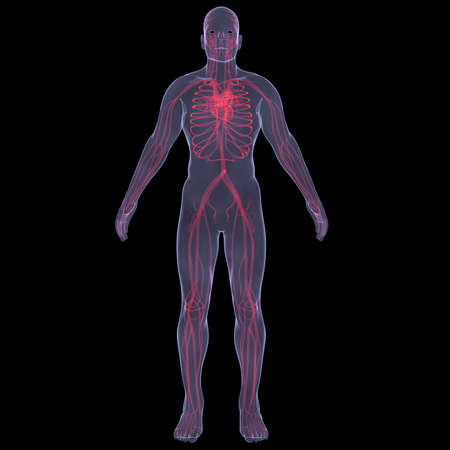 inflammated: The human bloodstream  X-ray image rendering on black background Stock Photo