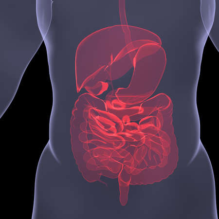 X-Ray picture of a person  Sore digestion  Isolated render on a black background Stock Photo - 19054638
