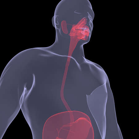 X-Ray picture of a person  Sore digestion  Isolated render on a black background Stock Photo - 19126283