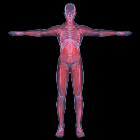 X-Ray picture of a person  muscle  Isolated render on a black background Stock Photo - 19443548