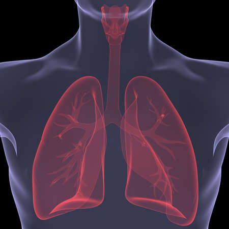X-Ray picture of a person  lungs  Isolated render on a black background Stock Photo - 19443564