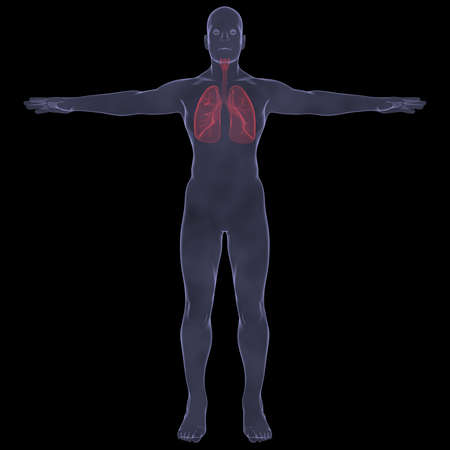 X-Ray picture of a person  lungs  Isolated render on a black background Stock Photo - 19443513