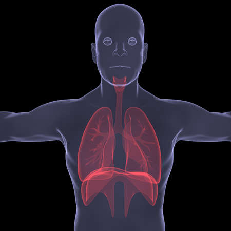 X-Ray picture of a person  lungs  Isolated render on a black background Stock Photo - 19443538