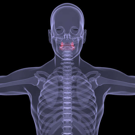 X-Ray picture of a person  Sore digestion  Isolated render on a black background Stock Photo - 19443610