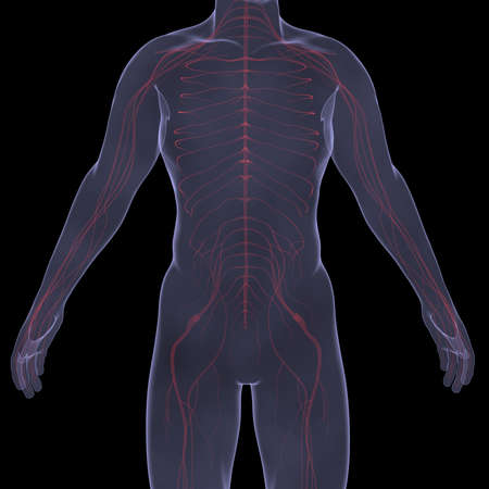X-Ray picture of a person  Sore digestion  Isolated render on a black background Stock Photo - 19443603