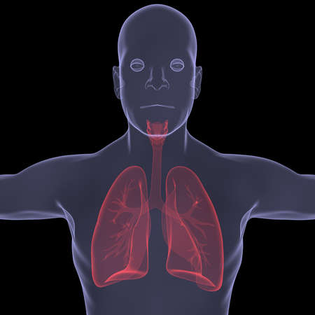 X-Ray picture of a person  lungs  Isolated render on a black background Stock Photo - 19443588