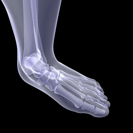 The human foot  X-ray render on a black background photo