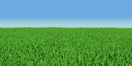 Field of green grass  3d render on blue sky background photo