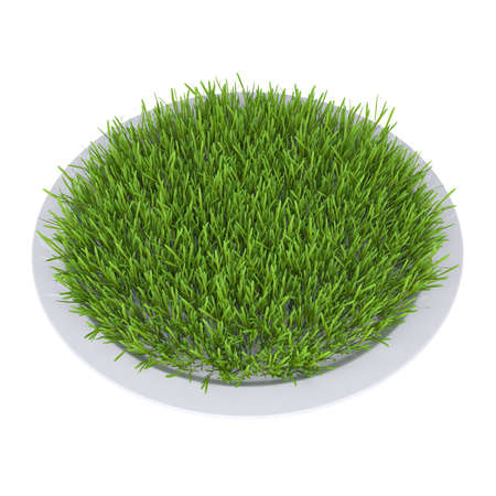 Green grass on a plate  Isolated render on a white background photo