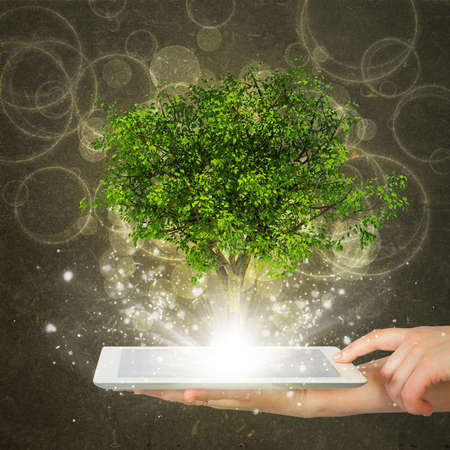 tablet pc in hand: Hand hold tablet pc with magical green tree