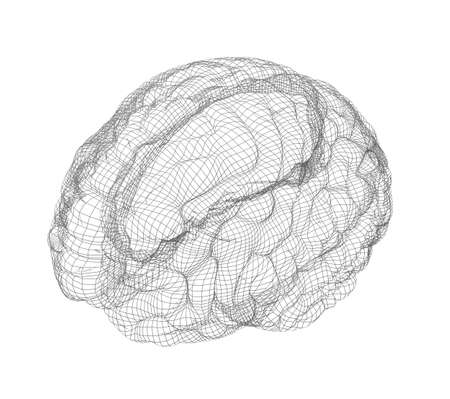 medical scans: Wire-frame of human with occipital region of brain. Isolated on white background