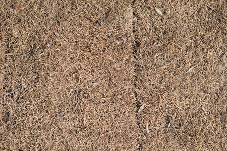 lifeless: Dry brown lifeless grass texture background. Close-up