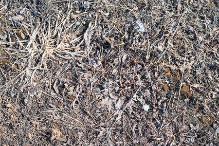 lifeless: Dry brown lifeless grass with stones texture background
