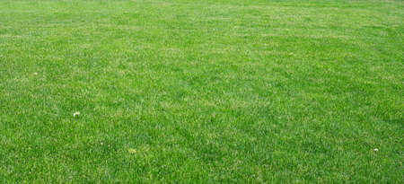 closeup view: Green grass with plants, nature background. Close-up view