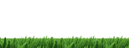 closeup view: Green grass on isolated white background, close-up view