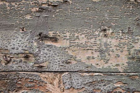 bad condition: White wood texture background with cracks and nail, bad condition