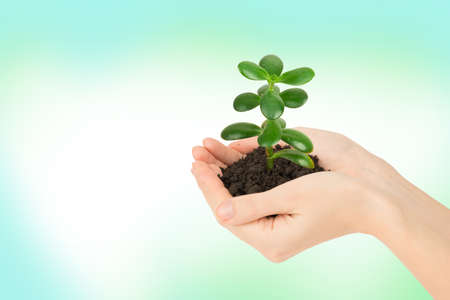 hands holding plant: Humans hands holding plant with ground on colorful background