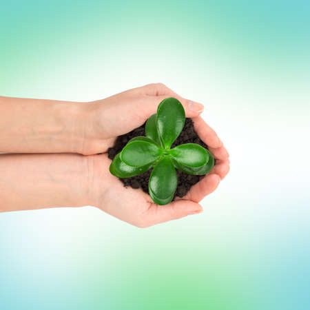 tree top view: Womans hands holding plant with ground on colorful background