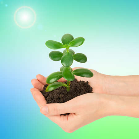 hands holding plant: Womans hands holding plant with ground on colorful background