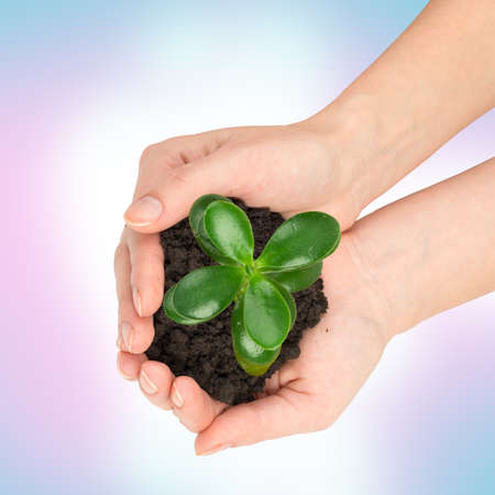 hands holding plant: Humans hands holding plant with ground on colorful background, top view