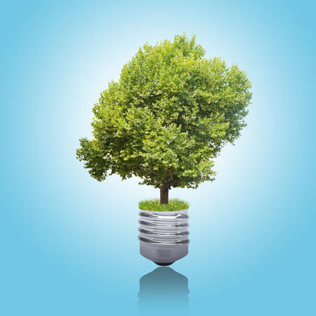 blue green background: Green tree in bulb foundation on blue background