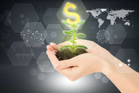 hands holding plant: Womans hands holding plant with ground and dollar sign on abstract background