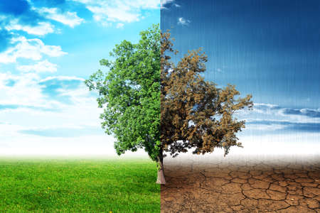 ecosistema: árbol de dos lados con lados verdes y marrones, el concepto de naturaleza