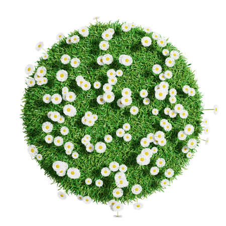 grass close up: Natural grass arena with flowers isolated on white background. Arena for your design. The symbol of spring, environment, growth and nature. 3D illustration. Top view