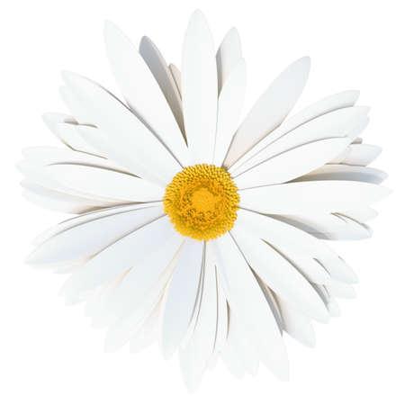 Chamomile flower. Summer symbol for your design