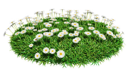 lush foliage: Natural grass arena with flowers