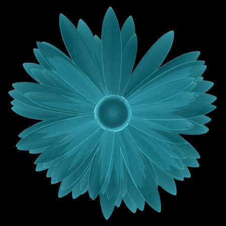 X-Ray Image of Chamomile Flower