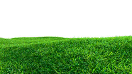 Green grass field isolated on white background Stock Photo