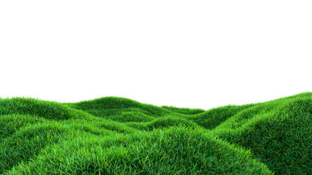 Grass background, fresh green fields, isolated