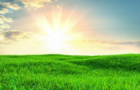 Green grass field on small hills