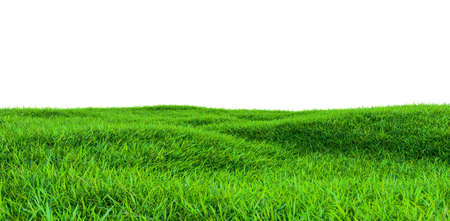 Green grass field isolated on white background 版權商用圖片