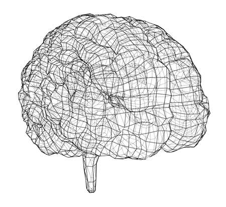 3D outline brain. Vector rendering of 3d. Wire-frame style. The layers of visible and invisible lines are separated Vettoriali