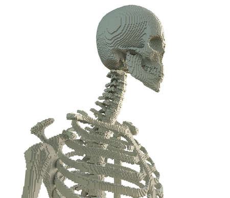 3d printed skeleton isolated