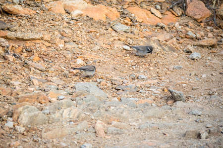 Birds roaming around in Joshua Tree National Park
