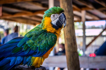 A Green and Gold Macaw in Orlando, Florida