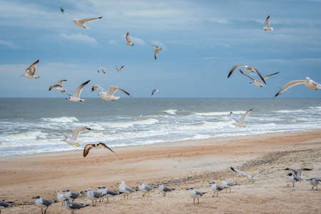 A noticeable bunch of birds were seen gliding in Atlantic coast