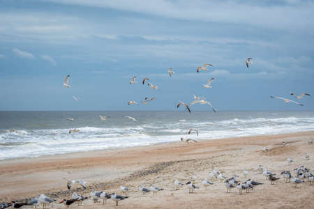 Flock of birds flying along the coastline of Amelia Island, Florida
