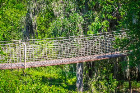 A long canopy walk in Santa Ana NWR, Texas 写真素材